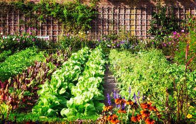 9 Maniere om `n mooi en produktiewe groentetuin beplan