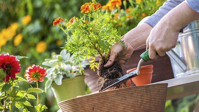 Kan tuinmaak eintlik help om jou allergieë?